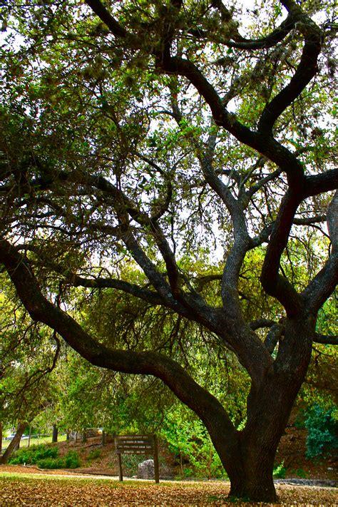 trees treehuggers  henri matisse   gypsy life