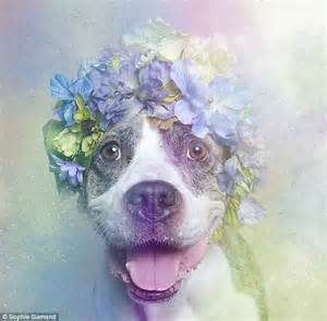 when do pitbull puppies open their artist gamand s dreamlike photos of rescue dogs wearing flower crowns daily