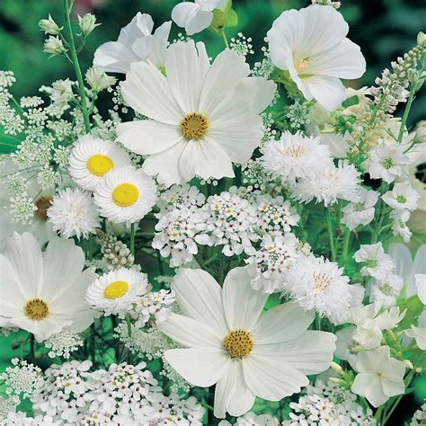 moon garden flowers moon garden collection white flowers selection