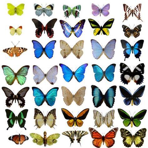 butterfly pattern pinterest butterfly pattern zebra s stripes butterfly s wings