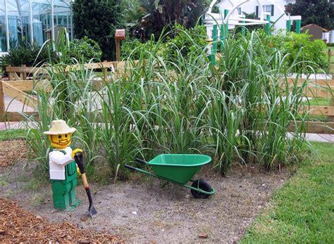 What Is Backyard Gardening 15 Ways To Brighten Up Your Garden On A Budget