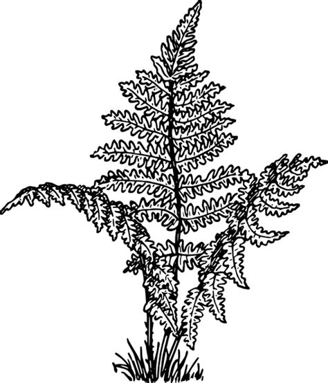 where the red fern grows coloring pages coloring pages