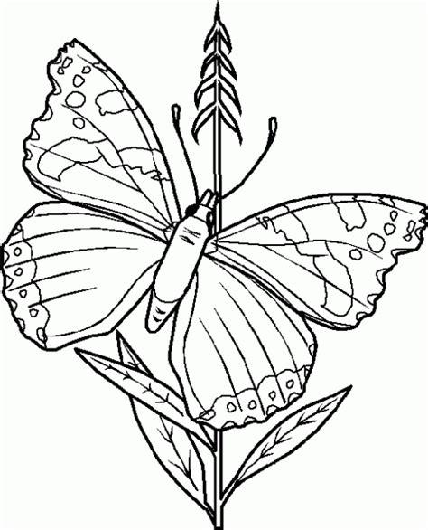 dibujo de mariposa en flores para colorear dibujo de mariposas y flores para colorear dibujos