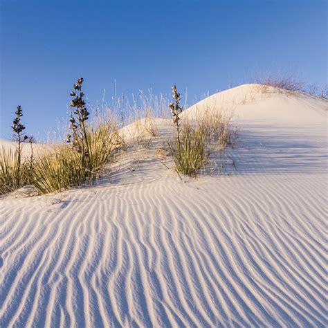 sand dune erosion   box top carolinacom