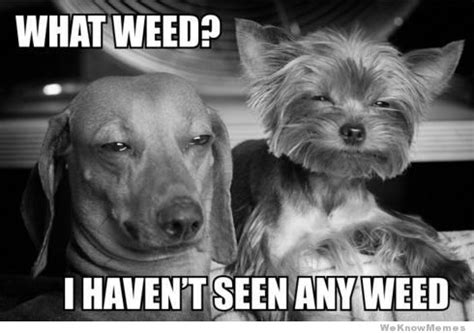 Funny Pot Memes - 26 best 420 weed memes weknowmemes