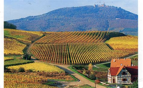 alsace france alsace france vineyard images