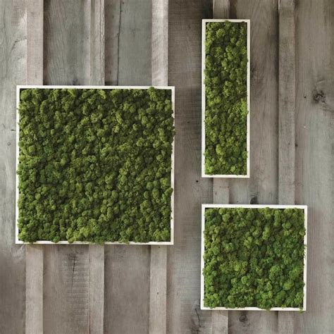 Vertical Moss Garden Moss Wall Vivaterra We Bought A Squares For