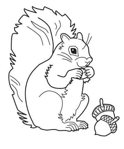 Coloring Page Of A Gray Squirrel | gray squirrel coloring download gray squirrel coloring