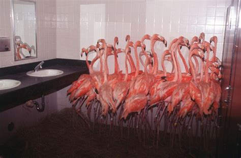flamingos in bathroom flamingos in the washroom 1funny com