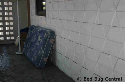 can bed bugs survive outside can bed bugs survive outside how to get rid of bed bugs in nigerian homes 10 bed