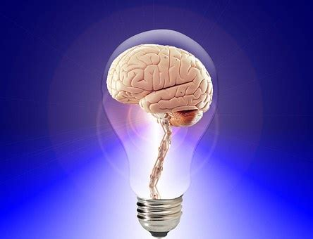 brain images · pixabay · download free pictures