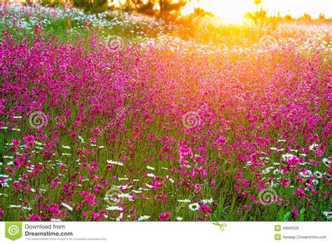 su fiori paesaggio di estate con i fiori su un prato e su un