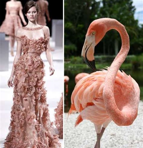 fashion themes related to nature 17 best images about nature inspiration on pinterest