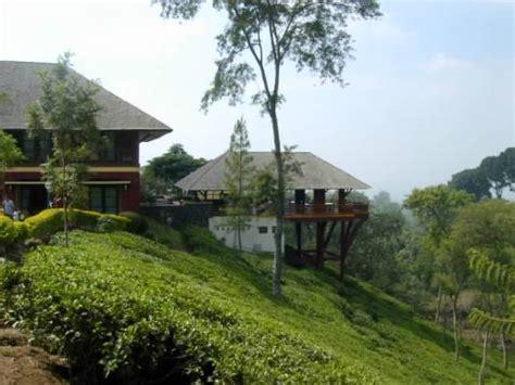 Teh Wonosari small road for visitor to roam picture of kebun teh