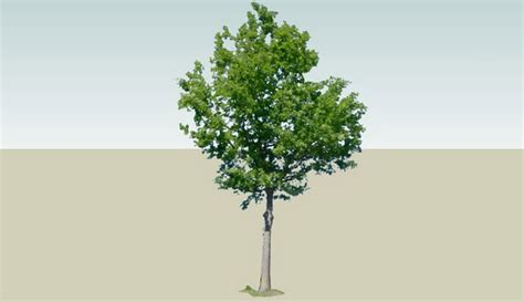 3d tree model design in sketchup free 3d 3d tree download