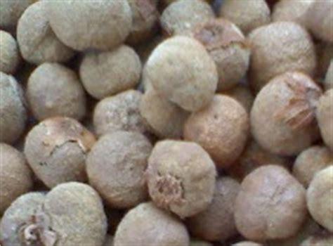 Benih Pepaya Emas jenis jenis hama dan penyakit yang menyerang tanaman