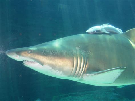 baby shark artinya apa baby shark image collections invitation sle and
