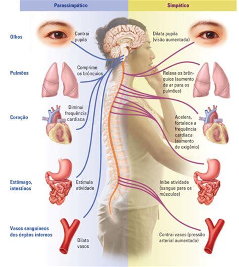 occhio lade neuroci 234 ncias em benef 237 cio da educa 231 227 o sistema nervoso