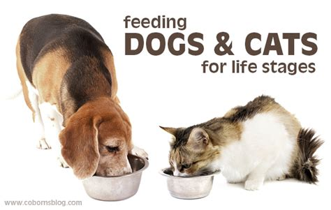 feeding dogs feeding dogs and cats for stages celebrate more