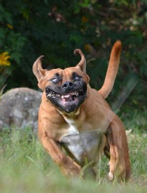scary pet faces – your best pictures | life and style