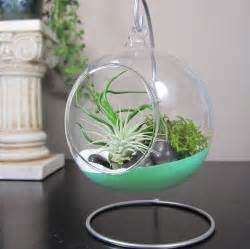 365 designs hanging glass terrariums dipped in paint with air plants beach sand and moss
