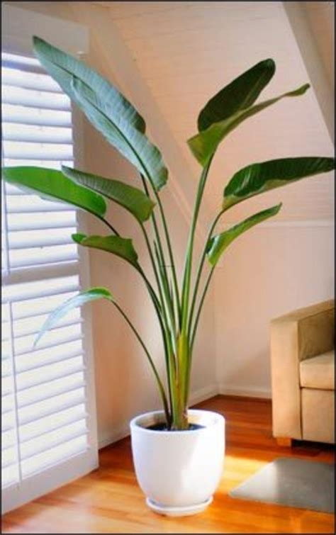 Indoor Plants For Interiors A Indoor Plants Design Bookmark 2061