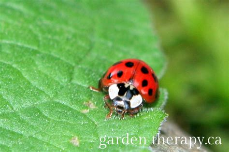 attracting beneficial insects garden therapy