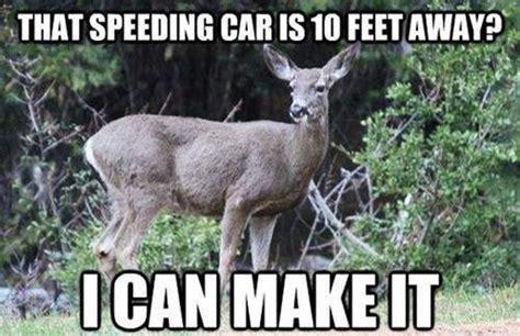 Deer Memes - deer meme disclosure news online