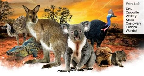Australia   Nature and Wildlife   Goway Travel