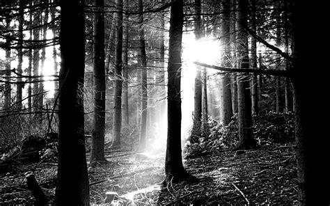 black and white woodland wallpaper black white 870061 walldevil