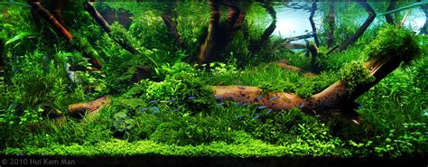 Aquascaping Contest by Manage Your Freshwater Aquarium Tropical Fishes And