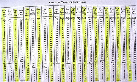Beef Gestation Table by Gestation Chart For Cows Search Results Calendar 2015