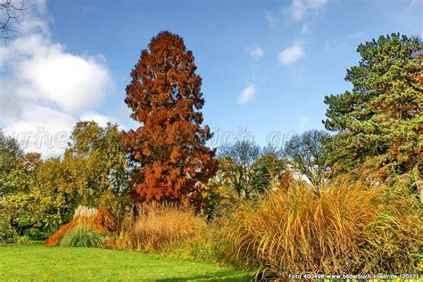 botanischer garten köln bilder bilderbuch k 246 ln launen der natur