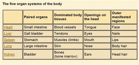 five major organs tcm world about traditional chinese medicine for keeping health