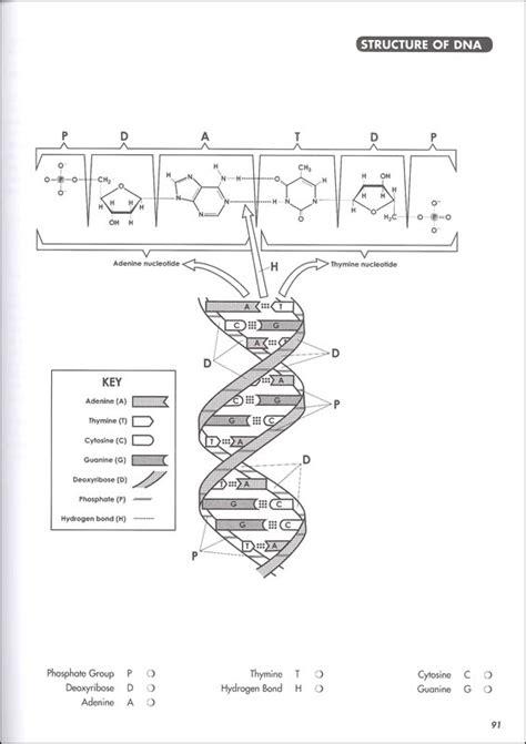 biology coloring book princeton review biology coloring workbook 2nd ed princeton review