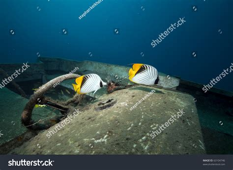 speed boat wreck speedboat wreck fish and ocean taken in the red sea