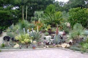 cacti succulent garden