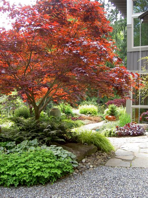 cool coral japanese maple method seattle traditional landscape remodeling ideas with bainbridge