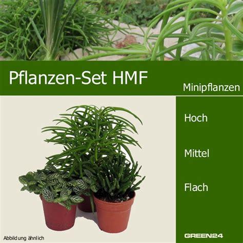 pflanzen set garten mini pflanzen set hmf 3 pflanzen