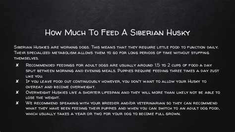 best food for siberian husky puppy what does a siberian husky puppy eat what is the best food for