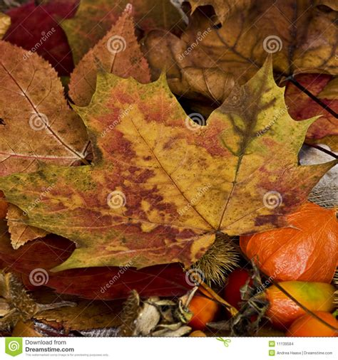 Autumn L by Autumn Still L Ife Stock Images Image 11139584