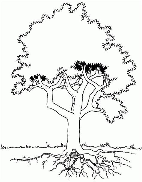 imagenes para colorear del otoño dibujos de 225 rboles para descargar imprimir y colorear