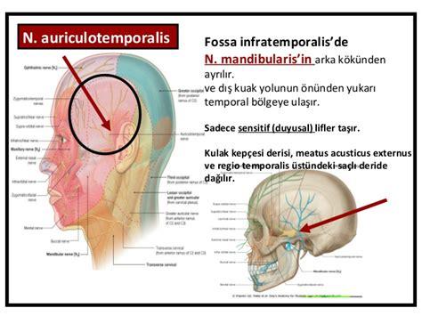 Sensitif Uc fossa temporalis fossa infratemporalis fossa pterygopalatina fazlas