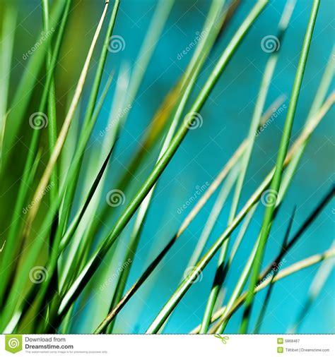 Soft Grass soft grass stock image image of environmental botany