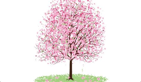 Pohon Cherry By One Home pink cherry blossom tree vectorish