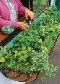 Window Herb Garden by Kitchen Window Herb Garden My Hacienda Landscape Pinterest