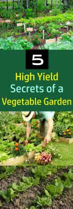 Help you ideas about vegetable gardening on pinterest gardening to