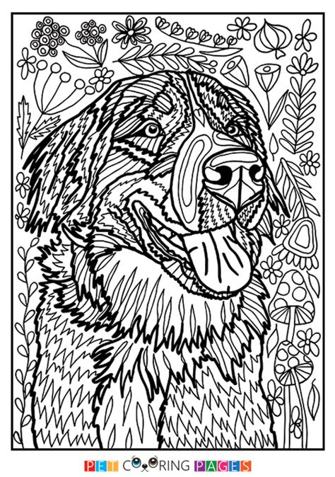 mountain dog coloring page bernese mountain dog coloring page quot bernadette quot zileart