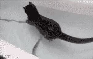 Cat Swimming In Bathtub by Cat Swimming In Bathtub