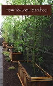 how to grow bamboo homestead survival